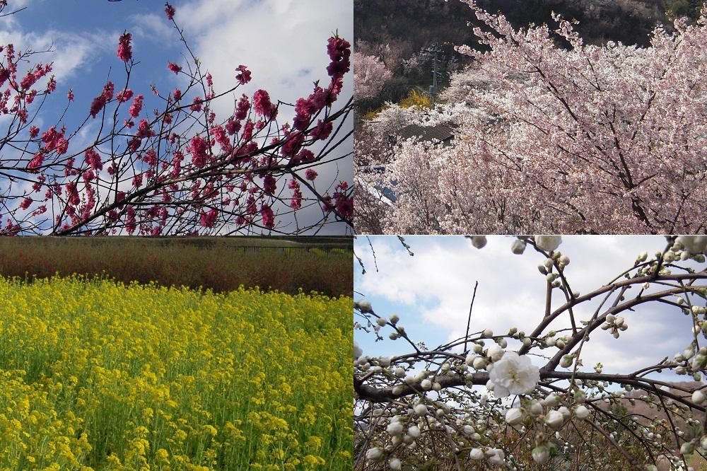 花見山の花~その他の花